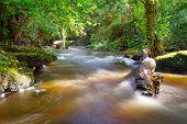 picture of irish moss  - Beautiful creek of Clare Glens - JPG