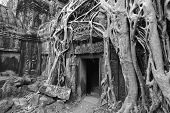 stock photo of raider  - The tomb raider temple at Angkor Thom - JPG