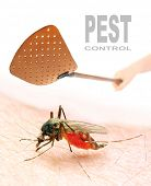 Smashing flyswatter over a sucking mosquito. Ecological pest control. Picture with space for your te