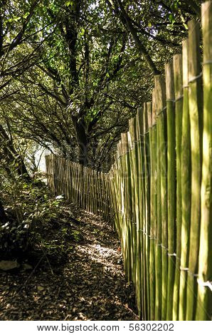 Wooden fence in a forest