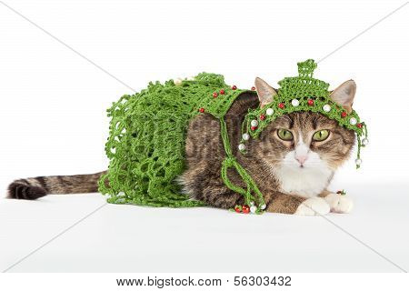 Cat wearing a Christmas tree is isolated on white