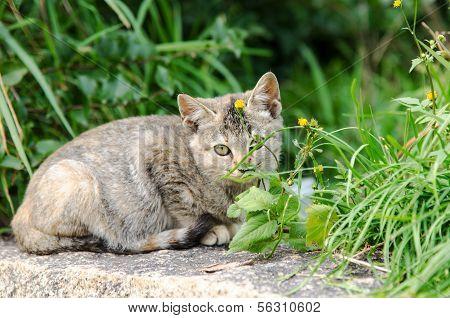 Cautious Kitten (small Cat)