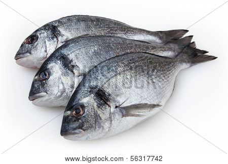 Fresh Fish Dorado Isolated On White Background With Clipping Path