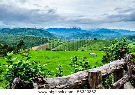 Rice Fields at Maechaem in chiangmai, Thailand.