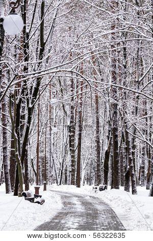 verschneiten Winter park