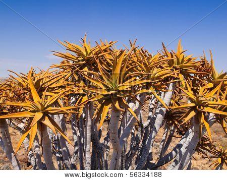Aloe Tree Detail