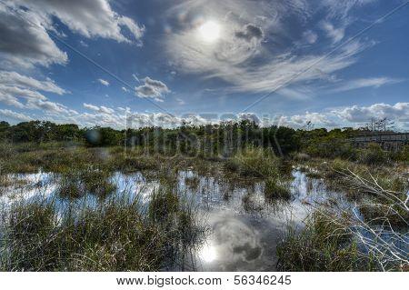 Paisaje escénico los Everglades de Florida