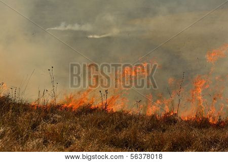 fire on a field with dried grass