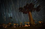 Baobab and night sky with star trails. Madagascar