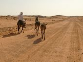 Wadi - Halfa, Sudan - 20 November, 2008:  An Unknown Man Riding A Donkey And Still Conducts Two Donk