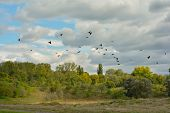 image of bird fence  - birds flying over trees and a fence before storm - JPG
