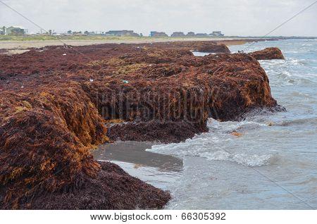 Seaweed Cliffs Buildup at Matagorda Beach
