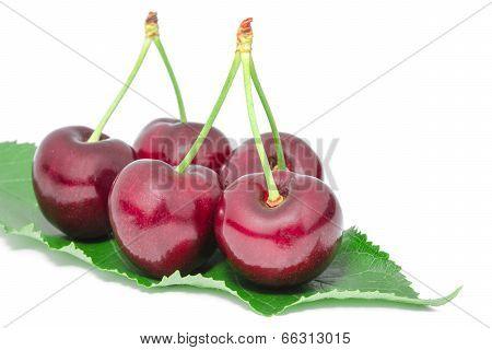 Sweet Juicy Cherry Tasty Ripe Berries Big Fruits