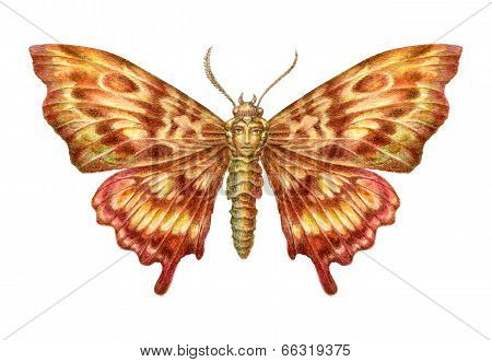 Fairy-tale Butterfly With Face Inclusion Painting. Isolated On White