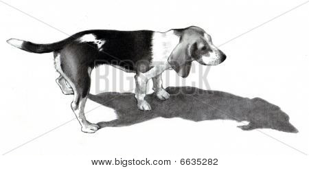 Pencil Drawing of A Beagle Dog