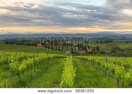 Vineyards In Tuscany At Dusk, Italy