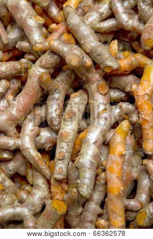 Fresh Turmeric Root