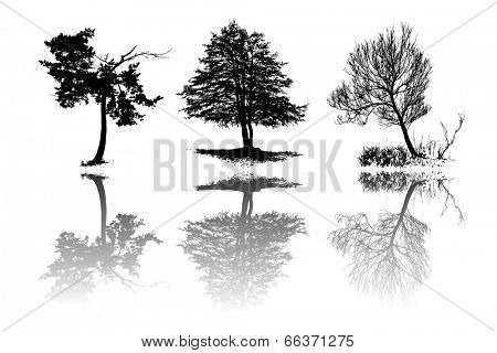 Set of tree silhouettes with reflection, vector