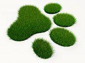 pic of animal footprint  - green grass animal footprint on white background - JPG