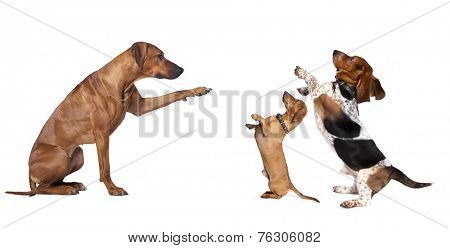 group of dog standing