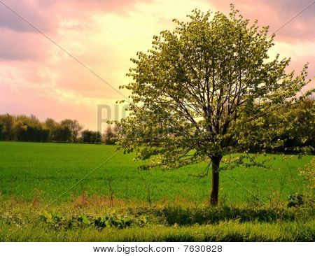 Tree In Summer
