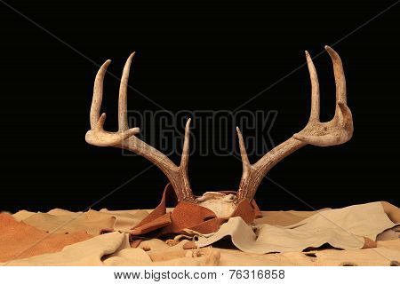 Large Rack Of Deer Antlers