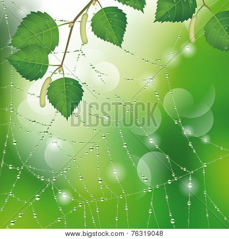 Spider web with dew and leaves of birch. Nature background. Vector illustration
