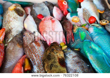 Close up of a variety of colorful fresh fish on display at fishmarket