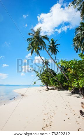 Perfect tropical white sand beach in Philippines