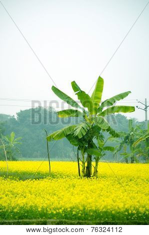 Green flower and banana tree