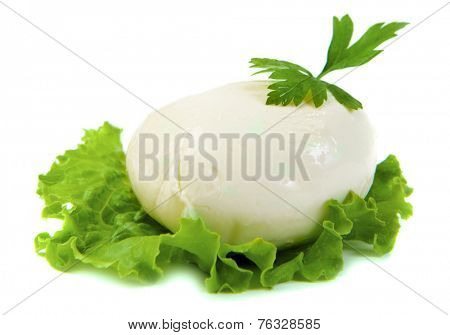 mozzarella cheese on green leaf