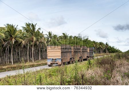 Truck For Transporting Sugar Cane