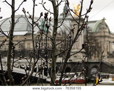 Raindrops On The Branches Of A Tree In Winter In Paris
