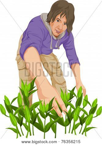 Vector Of Man Plucking Vegetables.