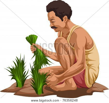 Vector Of Farmer Plucking Vegetables.