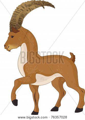 Wild Goat Or Capra Aegagrus, Illustration