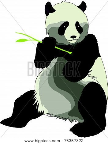 Giant Panda Or Ailuropoda Melanoleuca, Illustration