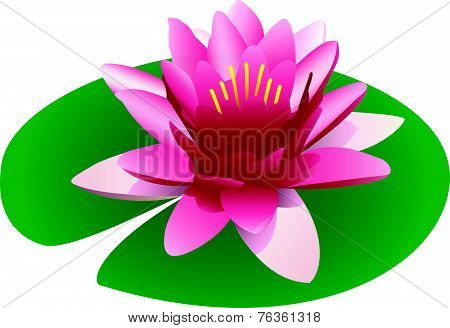 Illustration Of A Floating Pink Lotus