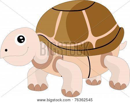 Cute Turtle, Illustration