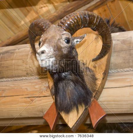 Goat. Stuffed Animal
