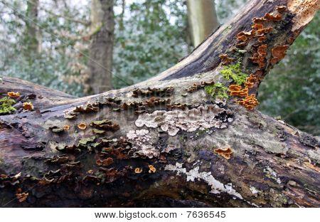 Bracket Fungi and moss