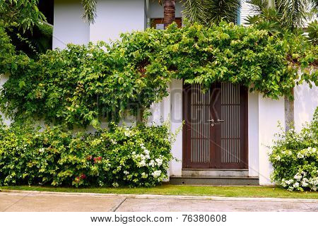 Comfy cottage with curly plant and flowers on walls