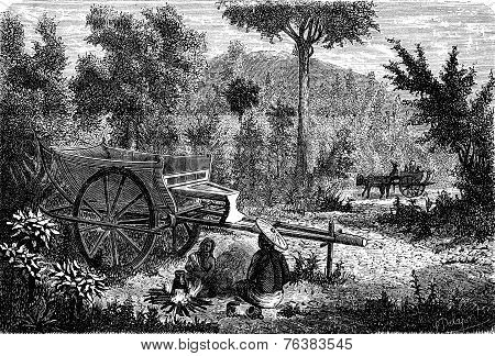 Oxcart Lao, Vintage Engraving.