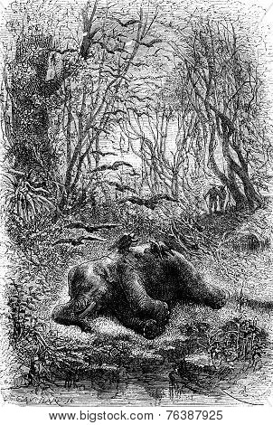 Encounter An Elephant Eats By Vultures, Vintage Engraving.