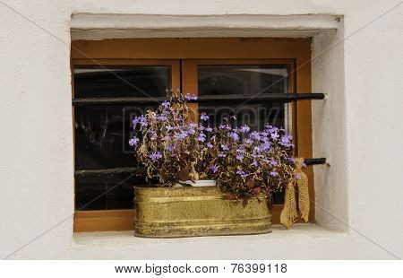 Window Flower