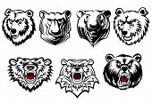 picture of growl  - Black and white vector bear heads with different head shapes and expressions - JPG