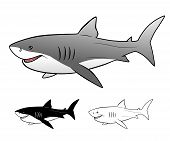 picture of great white shark  - Vector illustration of Great white shark isolated - JPG