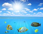 stock photo of sky diving  - Tropical reef fish in sea with sunny sky - JPG