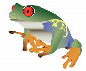 picture of red eye tree frog  - Red eyed colorful frog isolated against a white background - JPG