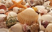 foto of sanddollar  - Assorted Sea Shells as a Background includes Starfish - JPG